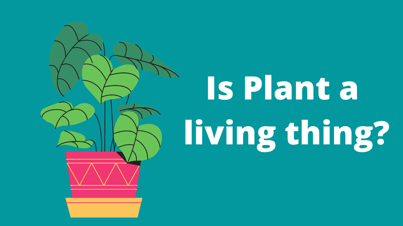 Is Plant a living thing