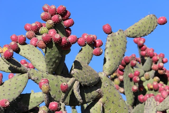 What is cactus and aloe vera good for